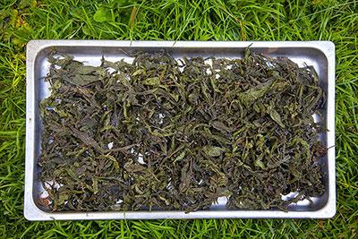 Способы заваривания копорского чая